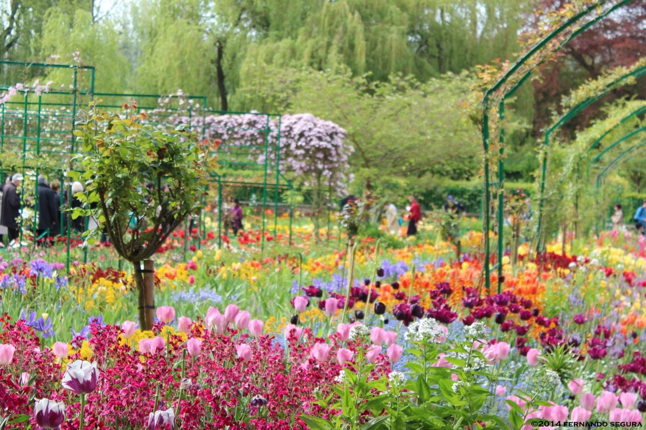 Encante se nos jardins de monet caminhos do mundo for Jardines monet
